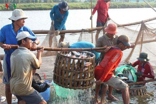 Hai mặt hàng tôm và cá tra vẫn chiếm ưu thế trong việc xuất khẩu thủy sản ở Việt Nam.