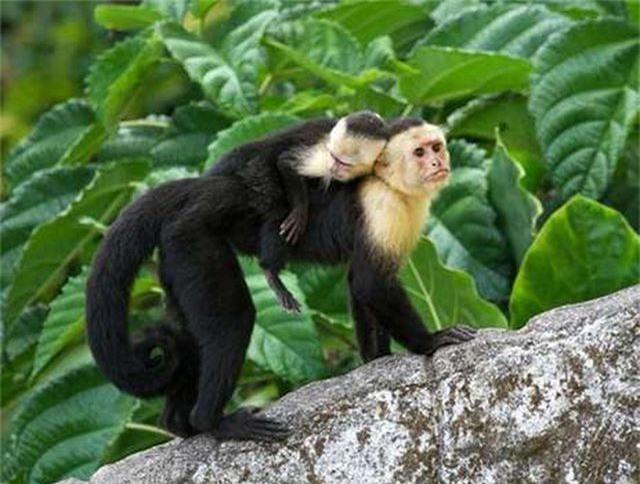 Video khỉ đập vỡ cửa kính tẩu thoát thu hút triệu lượt xem - 2