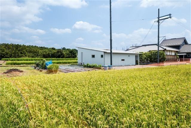 Nhà cấp 4 thiết kế cực tinh tế được xây giữa đồng lúa xanh, khung cảnh vừa đẹp vừa nên thơ - Ảnh 7.