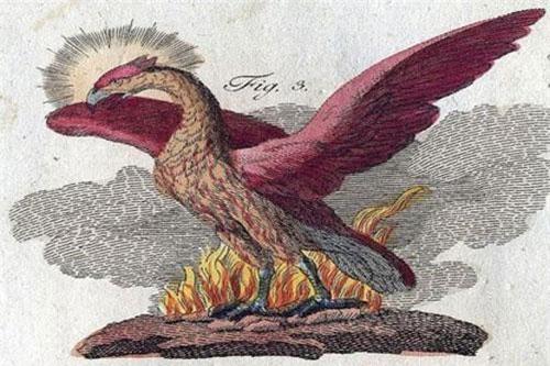 Một số nền văn minh trên thế giới như Ai Cập, Hy Lạp... có những giai thoại, truyền thuyết cổ xưa về chim phượng hoàng. Điểm chung của những câu chuyện về loài chim này là nó tượng trưng cho điềm lành và sự cao quý.
