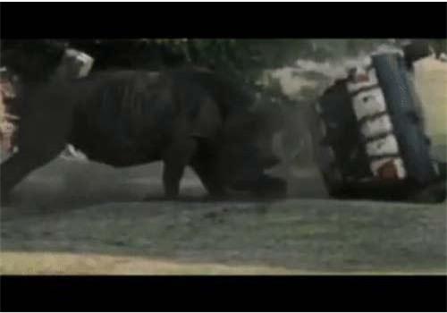 """Tê giác """"nổi điên"""", lăn xe chở khách như vần đồ chơi."""