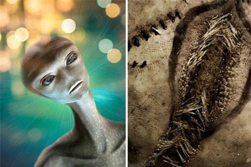 Những sinh vật kỳ lạ được cho là trứng của người ngoài hành tinh.