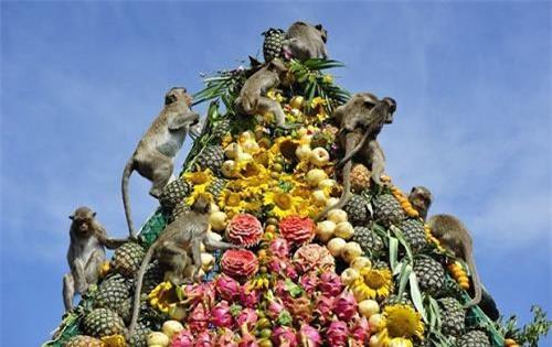 """Quốc gia có lễ hội buffet dành cho """"Khỉ"""" nổi tiếng thế giới là Thái Lan"""