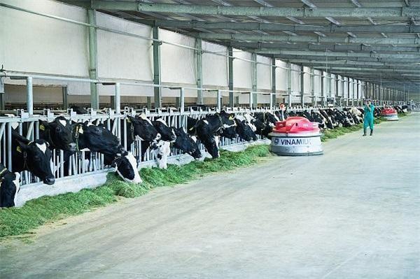 Trang trại bò sữa Vinamilk Tây Ninh là trang trại đi đầu về ứng dụng công nghệ 4.0 trong vận hành và quản lý