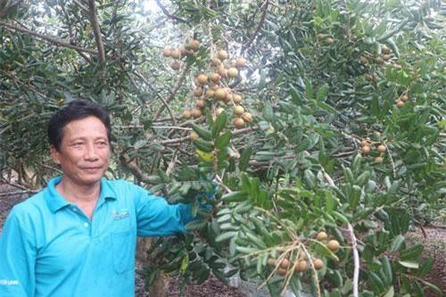 Ông Nguyễn Hồng Tiến giới thiệu chùm nhãn xuồng cơm vàng.