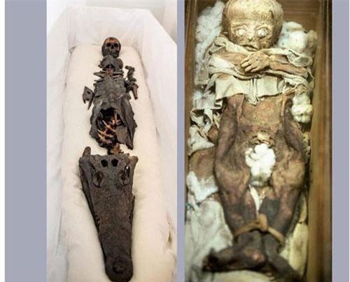 Không giống như nhiều xác ướp Ai Cập, xác ướp nửa người nửa cá sấu khiến giới chuyên gia vô cùng bất ngờ. Theo đó, các chuyên gia đã vào cuộc giải mã bí ẩn về xác ướp đặc biệt này.