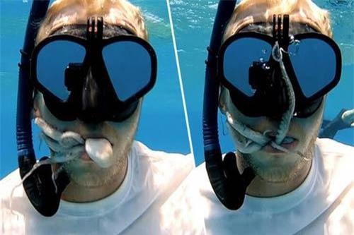 Thợ lặn bị bạch tuộc chui tọt vào miệng.