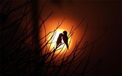 Hình ảnh động vật ghi cảnh cặp chim in bóng trên nền trời lúc bình minh tại khu rừng bị cháy rụi gần thành phố Porto Velho, Brazil. (Nguồn Guardian)