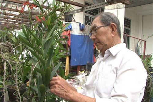 Nghệ nhân Tám Ngọc đang chăm sóc phong lan.