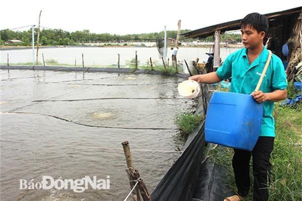 Nhiều nông dân ở Nhơn Trạch đang làm giàu từ mô hình nuôi thủy sản nước lợ