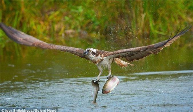 Kich tinh canh chim ung bien san doi ca cung luc-Hinh-3