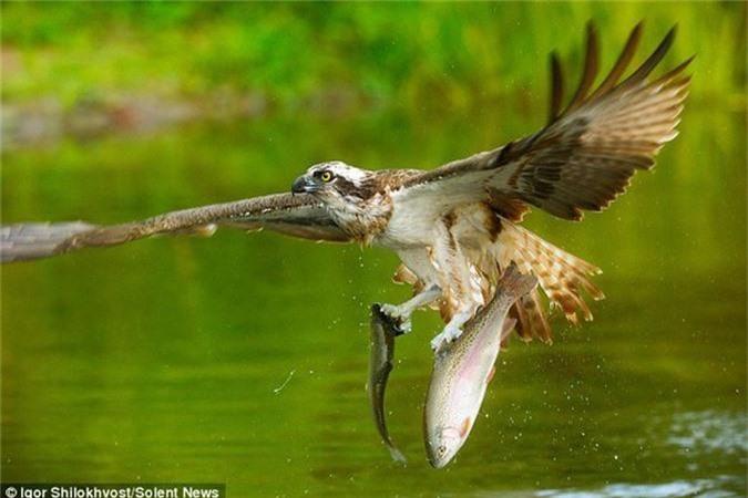 Kich tinh canh chim ung bien san doi ca cung luc-Hinh-4