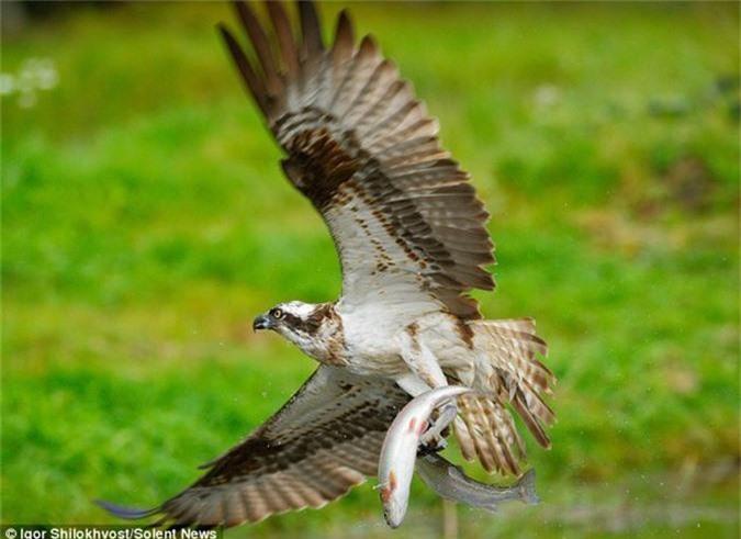 Kich tinh canh chim ung bien san doi ca cung luc-Hinh-5