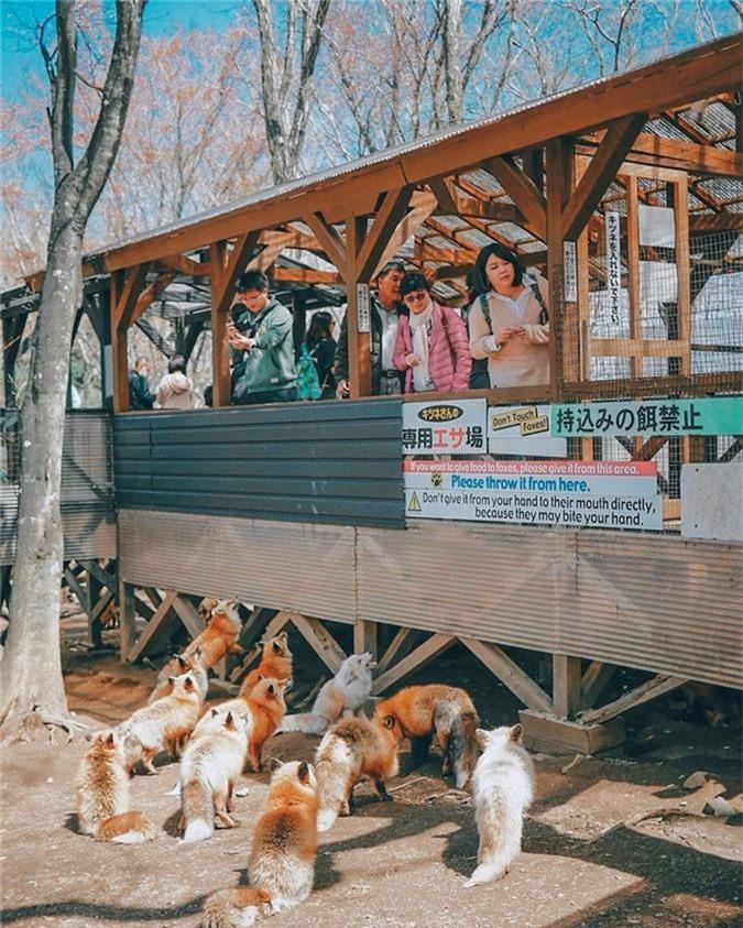 Ngoi lang co hang tram con cao beo, luoi o Nhat Ban-Hinh-5
