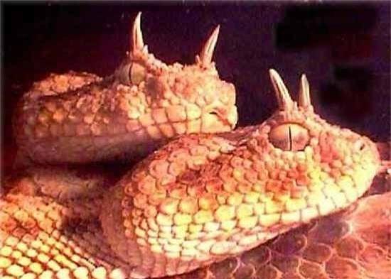 Những loài rắn vừa độc, vừa xấu xí nhất thế giới