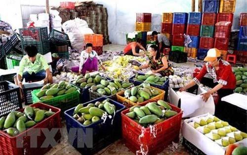 Trung Quốc là thị trường nhập khẩu nông sản lớn nhất của Việt Nam. Ảnh minh họa.