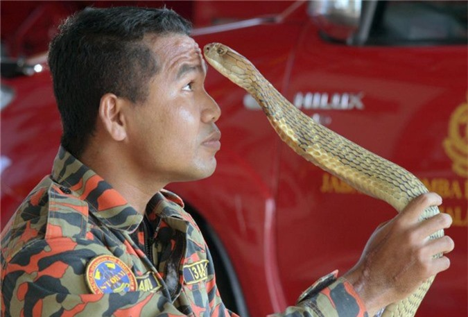 malaysia: chuyen gia bat ran bi ho mang chua khong lo can chet hinh anh 2