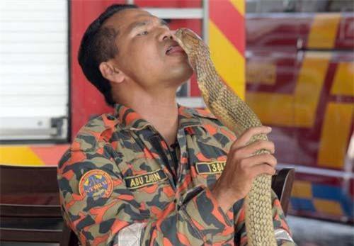 Abu Zarin Hussin, 33 tuổi, đã tử vong sau khi bị một con rắn hổ mang khổng lồ cắn.