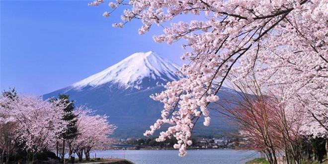 """8. """"Xứ sở phù tang"""" là...? """"Xứ sở phù tang"""" hay """"đất nước phù tang"""" là biệt danh của Nhật Bản. Theo sách """"Chuyện Đông chuyện Tây"""", phù tang là một loài cây trong truyền thuyết của nước Nhật, có hình dáng như cây dâu."""