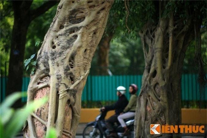 """""""Ma cay"""" bop co man ro giua ban ngay o Ha Noi-Hinh-3"""