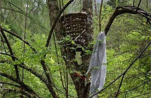Những chiếc rọ đựng thi thể trẻ em được đặt cao tít trên cành cây. Nguồn: internet.