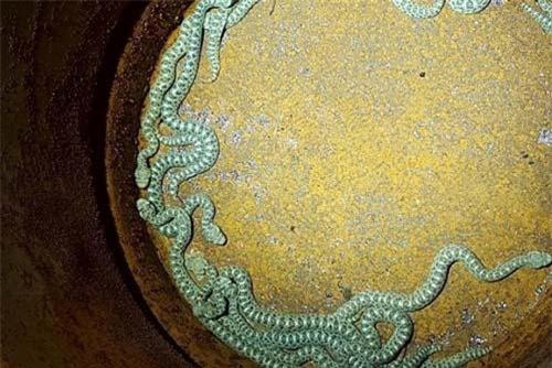 19 con rắn được cho vào thùng.