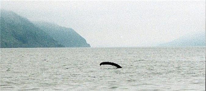 """Vi sao con nguoi """"dien cuong"""" san lung quai vat ho Loch Ness?-Hinh-4"""