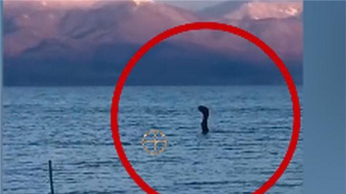 """Vi sao con nguoi """"dien cuong"""" san lung quai vat ho Loch Ness?-Hinh-5"""