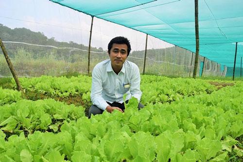Tại tỉnh Quảng Nam, nhiều bạn trẻ khởi nghiệp bằng mô hình trồng rau công nghệ cao.(Ảnh minh họa/Báo Quảng Nam)