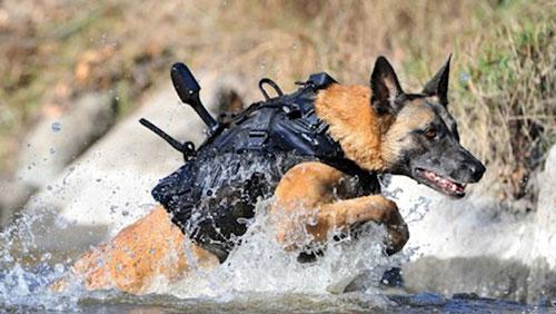 Sự thật đáng kinh ngạc về những chú chó nghiệp vụ