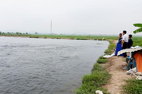 Ninh Bình: HTX tạo sức bật từ nuôi trồng thủy sản an toàn