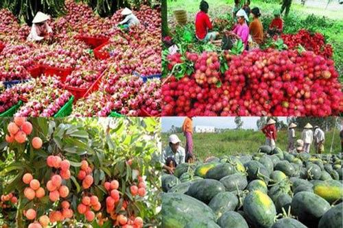 Trung Quốc không còn là thị trường dễ tính với nông sản Việt