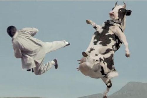Làm sao để nhốt 21 con bò vào trong 4 chuồng, mỗi chuồng là số lẻ?