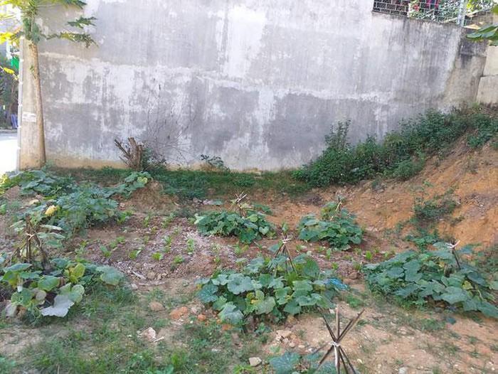 Mảnh đất tái định cư được cấp năm 2017 - hơn 2 năm sau khi ra tù đang có nguy cơ bị cưỡng chế thu hồi để trả tiền lãi suất chậm thi hành án của vợ chồng Biên, Hà.