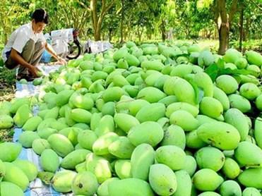 Liên kết doanh nghiệp - nông dân: Giải pháp hiệu quả trong xuất khẩu trái cây sang Mỹ