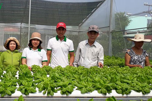 Vườn rau sạch công nghệ cao của chị Huỳnh Thị Sang đã tạo việc làm cho nhiều lao động tại địa phương với mức thu nhập ổn định.