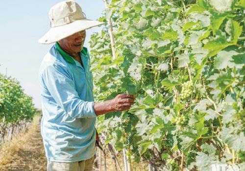 Ninh Thuận: Phấn đấu xây dựng huyện đạt chuẩn nông thôn mới