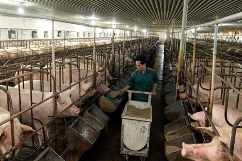 Chăn nuôi khép kín giúp HTX yên tâm vấn đề môi trường