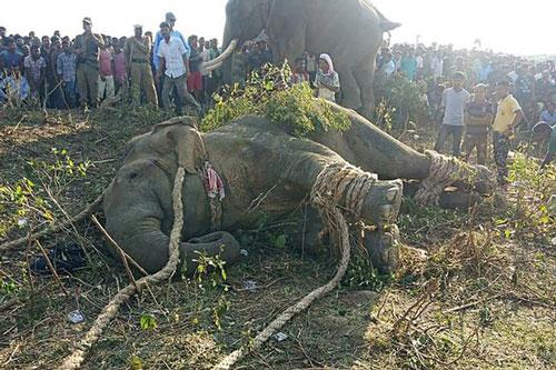 Con voi từng giết 70 người suốt 6 năm bị bắt sống.