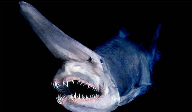 """25 loài """"quái thú"""" dị nhất hành tinh - ảnh 2"""