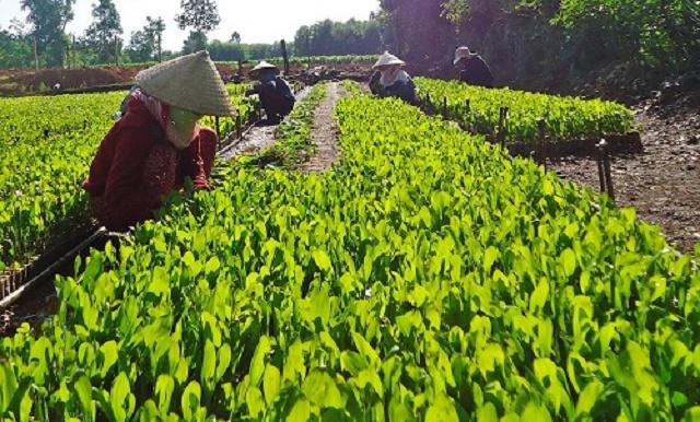 Mô hình sản xuất của HTX góp phần nâng cao ý thức bảo vệ môi trường của người dân