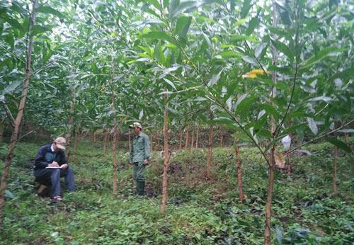 HTX Thanh Giang bảo đảm chất lượng cây trồng cho người dân