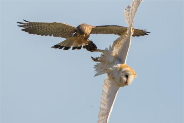Chim cat xao quyet cuop trang moi ngon cua cu-Hinh-4