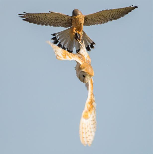 Chim cat xao quyet cuop trang moi ngon cua cu-Hinh-5