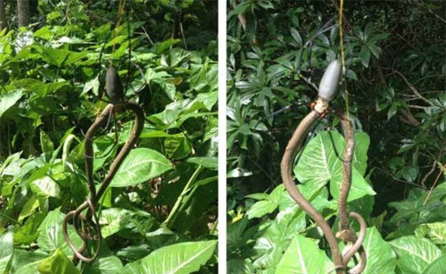 Kinh hoang canh tuong ran chet tham boi loai nhen-Hinh-2