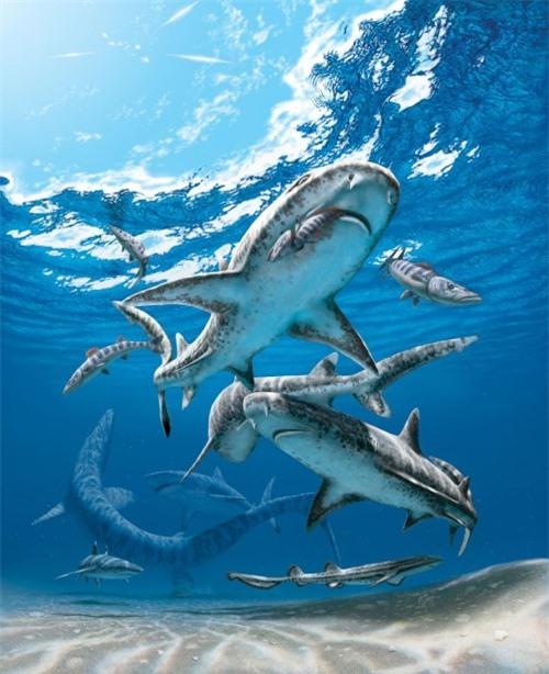 Khủng long tuyệt chủng buộc cá mập phải tiến hóa nhỏ lại? - 2