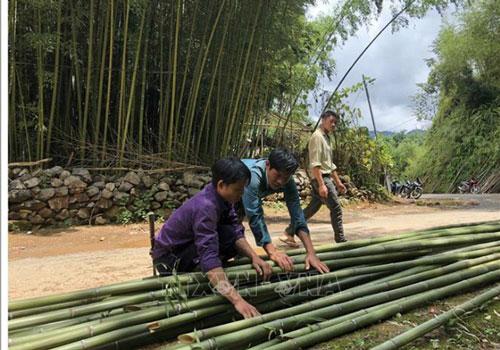 Cây trúc sào mang no ấm cho bà con ở huyện Bảo Lạc (Ảnh:Internet)