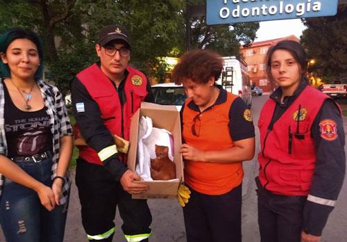 Theo thông tin đăng tải, cô Florencia Lobo, ở Tucumano, Argentina mới đây trong lúc đi dã ngoại đã tìm thấy một chú mèo con đáng thương trong một hang động gần Santa Rosa de Leales.