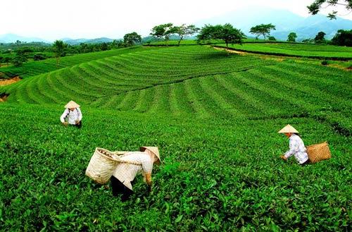 OCOP giúp nâng cao chất lượng, hiệu quả sản phẩm, góp phần xây dựng nông thôn mới Thái Nguyên