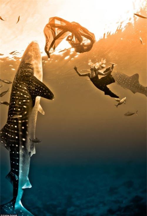 Xuống nước chụp hình cùng cá mập - 1